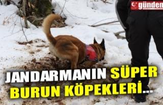 JANDARMANIN SÜPER BURUN KÖPEKLERİ...