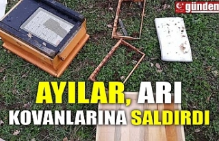 AYILAR ARI KOVANLARINA SALDIRDI