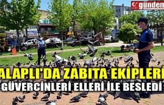 ALAPLI'DA ZABITA EKİPLERİ GÜVERCİNLERİ ELLERİ...