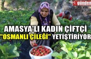 """AMASYA'LI KADIN ÇİFTÇİ """"OSMANLI ÇİLEĞİ""""..."""