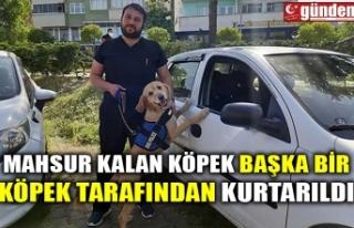 MAHSUR KALAN KÖPEK BAŞKA BİR KÖPEK TARAFINDAN...
