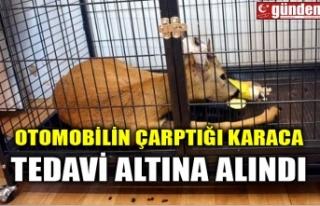 OTOMOBİLİN ÇARPTIĞI KARACA TEDAVİ ALTINA ALINDI