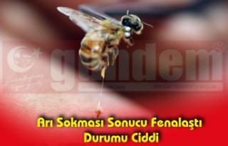 Arı Sokması Sonucu Fenalaştı Durumu Ciddi