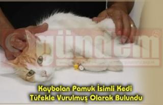 Kaybolan Pamuk İsimli Kedi Tüfekle Vurulmuş Olarak...