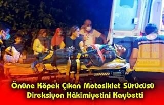 Önüne Köpek Çıkan Motosiklet Sürücüsü Direksiyon...