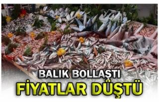 BALIK BOLLAŞTI FİYATLAR DÜŞTÜ!