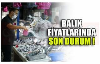 BALIK FİYATLARINDA SON DURUM !