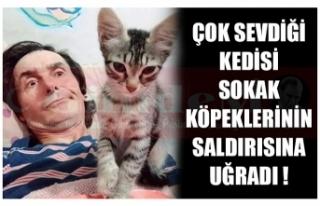 ÇOK SEVDİĞİ KEDİSİ SOKAK KÖPEKLERİNİN SALDIRISINA...