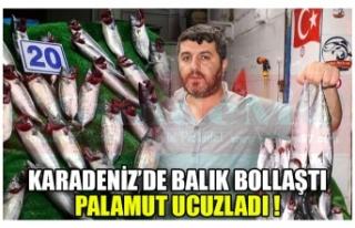KARADENİZ'DE BALIK BOLLAŞTI PALAMUT UCUZLADI !