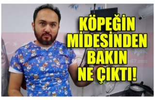 KÖPEĞİN MİDESİNDEN BALON ÇIKTI!