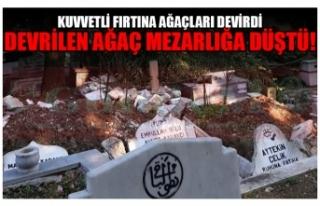 KUVVETLİ FIRTINA AĞAÇLARI DEVİRDİ DEVRİLEN AĞAÇ...