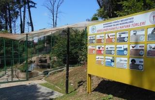 Mini hayvanat bahçesi şenlendi!