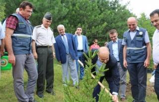 15 Temmuz Demokrasi Şehitleri adına hatıra ormanı...