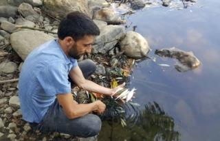 Büyük Melen Çayında Yüzlerce Balık Karaya Vurdu