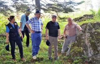 Çınar, Dirgine ormanlarında incelemelerde bulundu