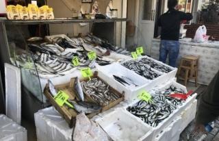 Balıkçı tezgahlarında hamsi kilosu 20 liraya kadar...