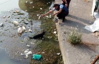 Alaplı Çayı'na düşen yavru köpeği zabıta kurtardı
