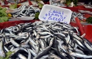 Balıkçılar Umutlu...!