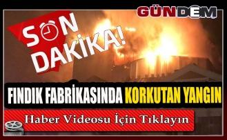 Fındık fabrikasında korkutan yangın!..