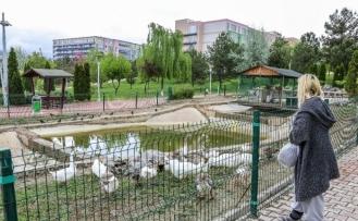 Üniversite öğrencisi kampüs bahçesindeki hayvanları unutmadı