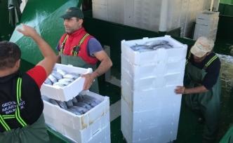 Akçakoca'da balıkçılar Karadeniz'den 40 ton palamutla döndü