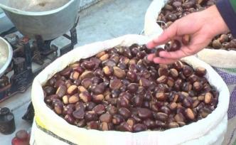 Düzce'de fındıktan sonra en çok kestane üretildi