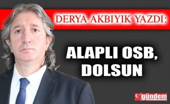 ALAPLI OSB,DOLSUN