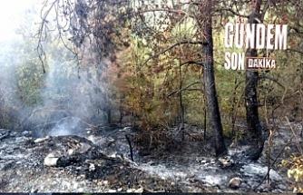 Ormanlık alanda yangın!..