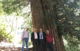 4 bin 114 yaşındaki ağacın yanından seslendi