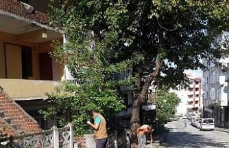 Akçakoca'da temizlik çalışmaları devam ediyor