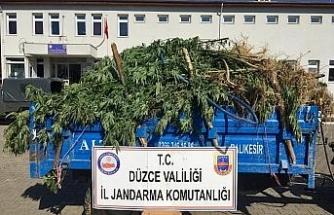Ormanın içine 738 kök kenevir ekmişler