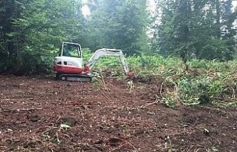 Ormanda gençleştirme çalışması yapıldı