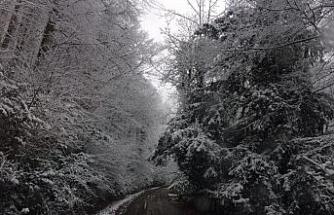 Ormancı gözüyle Yenice ormanlarında kar manzarası