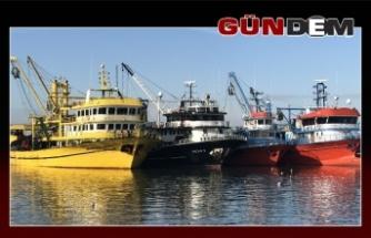 Karadeniz'de balık bereketi!..