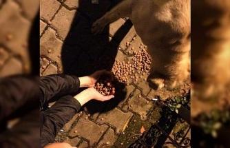 """Miniklerden """"Sokak dostlarımızı besleyelim"""" kampanyası"""