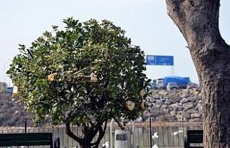 Kuşlar için ağaç dallarına ekmek asıyorlar