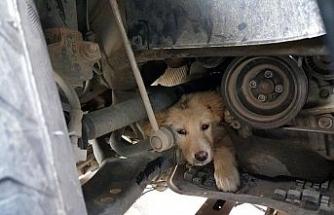 Yaramaz köpek aracın motor kısmına sıkıştı