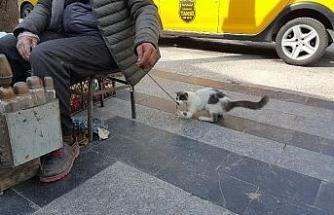 Boyacıyla sokak kedisinin dostluğu görenleri imrendiriyor