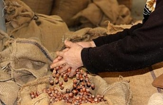 Düzce'den Avrupa'ya iki ayda bin 775 ton fındık ihraç edildi