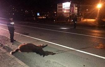 Yenice'de otomobilin çarptığı at telef oldu