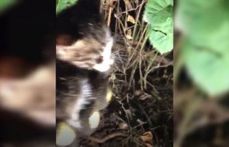 Toprağa gömülü kediyi itfaiye ekipleri kurtardı