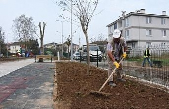 Düzce Belediyesi peyzaj çalışmasına devam ediyor