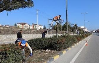 Safranbolu'da ağaç budama çalışması