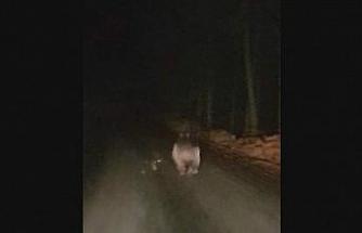 Kış uykusuna yatamayan ayı yola indi