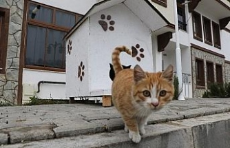 """Sokak hayvanlarına """"şefkat eli"""""""
