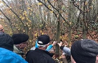 Rusya ve Gürcistan'dan gelen heyet kestane ağaçlarını inceledi