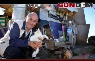 Hayatını sokak kedilerine adadı...