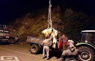 Uçurumda ağaca asılı kalan inek kurtarıldı
