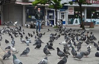Güvercinler aç kaldı...