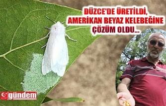 DÜZCE'DE ÜRETİLDİ, AMERİKAN BEYAZ KELEBEĞİ SORUNUNA ÇÖZÜM OLDU...